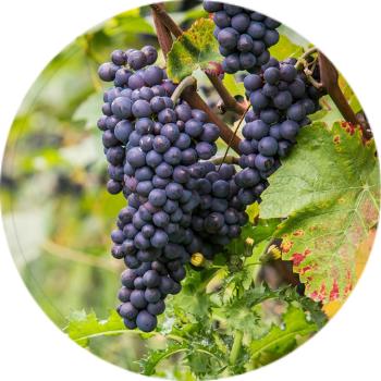 Teplé září – dobře se ovoci i vínu daří
