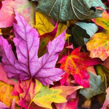 Magický podzim našich předků